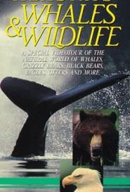 Alaska's Whales & Wildlife by Bo Boudart