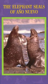 The Elephant Seals of Año Nuevo, directed by Bo Boudart